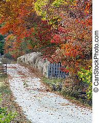 Autumn Country Lane