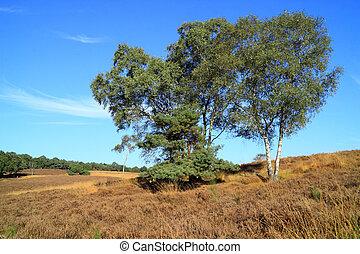 Autumn countryside landscape