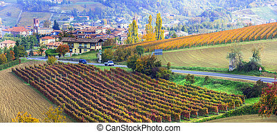 autumn countryside with rows of colorful vineyards in Piedmont, famous wine region of Italy