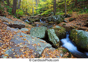 Autumn creek closeup with yellow maple trees and foliage on rocks in forest with tree branches.