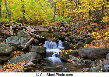 Autumn creek in forest - Autumn creek closeup with yellow...