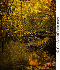 Autumn Creek Reflections