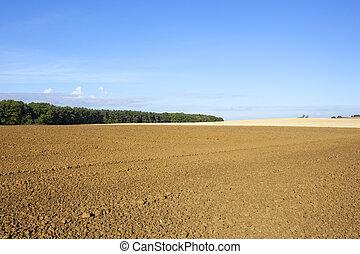 autumn cultivation