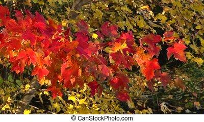 autumn dancing light