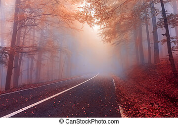 Autumn day in the foggy forest. Mysterious fog in the autumn forest.