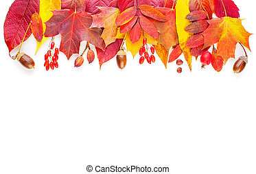 Autumn decoration border. Fall leaves isolated on white background, top view
