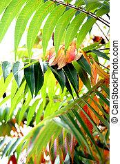 Autumn decorative large green leaves