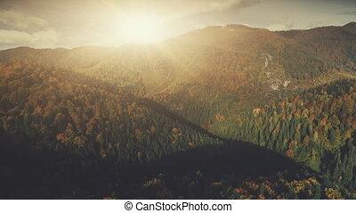 Autumn dense forest mountain scenery aerial view - Autumn...