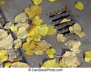 autumn drain