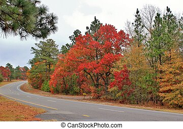 Autumn Drive - A winding road through an Autumn forest