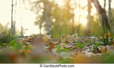 Autumn dry leaves falling on ground in autumn park in slow...