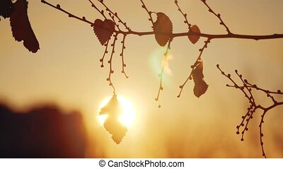 Autumn dry tree branch at sunset silhouette sunlight...