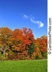 autumn drzewa