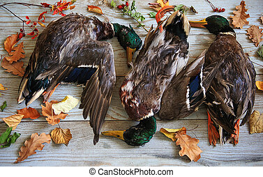 autumn duck hunting, trophies