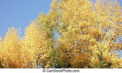 autumn., erdő