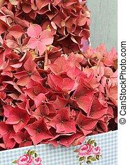 Autumn faded pink hydrangea
