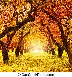 autumn., fall., 秋天, 公園