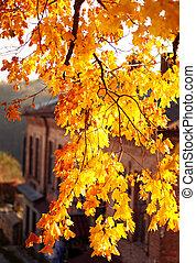 Autumn. Fall. Autumnal Park. Autumn Leaves