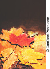 Autumn Fall background with colorful golden leaves with copy space. Happy Thanksgiving Card