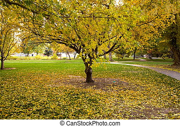 Autumn - Fall Background with fallen leaves