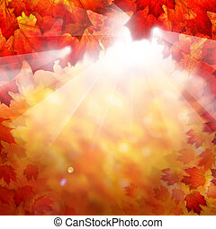 Autumn Fall Background with Red Maple Leaves and Sunlight