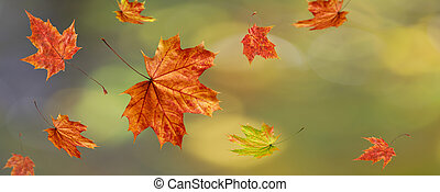 Autumn fall blurred background with falling maple leaves