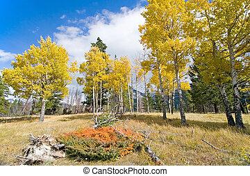 Autumn Fall Colors