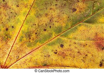 Autumn Fall Colours 1