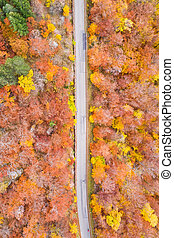 Autumn fall forest woods colorful leaves season aerial photo...