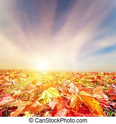 Autumn, fall landscape. Colorful leaves, sunset sky -...