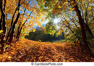 Autumn, fall landscape in forest. Sun shining through...