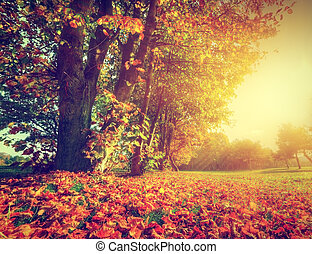 Autumn, fall landscape in park. Colorful leaves, sun shining through trees.