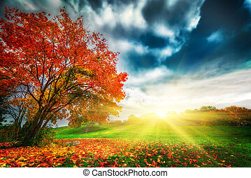 Autumn, fall landscape in park. Colorful leaves, sunny blue...