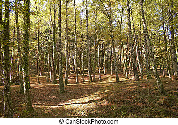 Autumn fall landscape - trees in forest