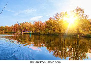autumn, fall, leaf fall, fall of the leaf. a large natural ...