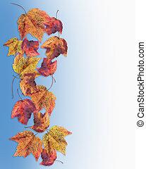 Autumn fall leaves borde