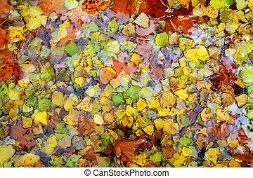 autumn fall leaves colorful background in water