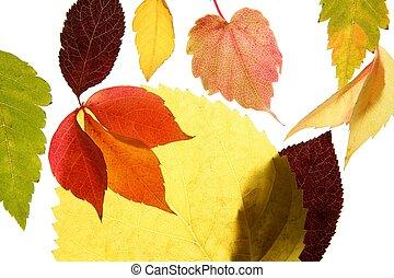 Autumn, fall leaves decorative still at studio white background