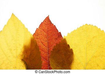 Autumn, fall leaves decorative still at studio white ...