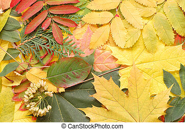 Autumn fall leaves - nature background
