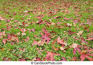Autumn fall leaves on a grass background
