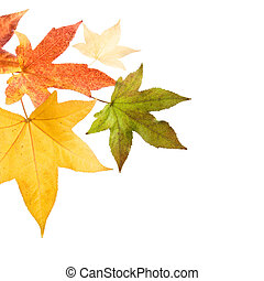 Autumn fall Leaves - Autumn leaves over white background.