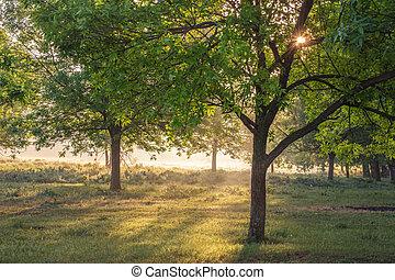 autumn., fall., outonal, park., árvores