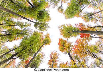 autumn., fall., park., 秋