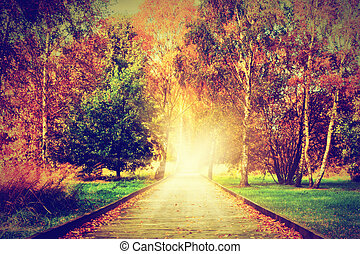 Autumn, fall park. Wooden path towards the sun, light -...