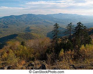 autumn fall pine fir panorama landscape