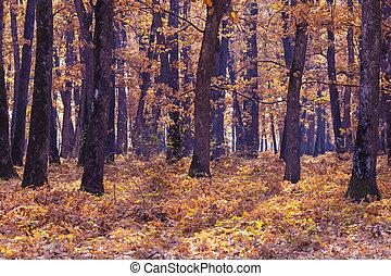Autumn, Fall scene. Beautiful Autumnal park. Beauty nature scene