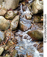 Autumn, fall. Stream detail with leaves.