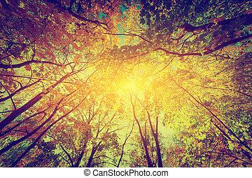 Autumn, fall trees. Sun shining through colorful leaves. Vintage