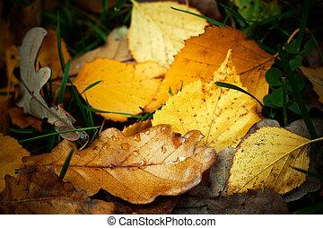 Autumn fallen leaves with rain drops, closeup shot.
